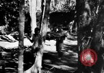 Image of Chinese casualties evacuated Burma, 1943, second 46 stock footage video 65675072107