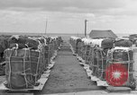 Image of combat cargo Japan, 1951, second 17 stock footage video 65675072149