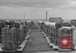 Image of combat cargo Japan, 1951, second 21 stock footage video 65675072149