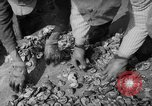 Image of oyster fishing New Jersey United States USA, 1946, second 21 stock footage video 65675072232