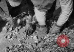 Image of oyster fishing New Jersey United States USA, 1946, second 22 stock footage video 65675072232