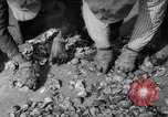 Image of oyster fishing New Jersey United States USA, 1946, second 24 stock footage video 65675072232