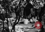 Image of Surplus food distributed for starving East Germans Germany, 1951, second 56 stock footage video 65675072259
