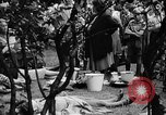 Image of Surplus food distributed for starving East Germans Germany, 1951, second 57 stock footage video 65675072259
