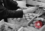 Image of oranges and cherries Berlin Germany, 1951, second 23 stock footage video 65675072260