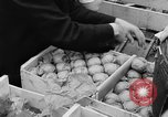 Image of oranges and cherries Berlin Germany, 1951, second 24 stock footage video 65675072260