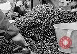 Image of oranges and cherries Berlin Germany, 1951, second 30 stock footage video 65675072260