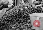 Image of oranges and cherries Berlin Germany, 1951, second 31 stock footage video 65675072260