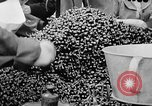 Image of oranges and cherries Berlin Germany, 1951, second 32 stock footage video 65675072260