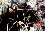 Image of Tet Offensive Saigon Vietnam, 1968, second 50 stock footage video 65675072387