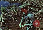 Image of survival techniques Philippines, 1968, second 38 stock footage video 65675072400