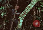 Image of survival techniques Philippines, 1968, second 54 stock footage video 65675072400