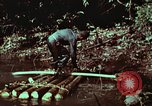 Image of survival techniques Philippines, 1968, second 36 stock footage video 65675072402