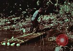 Image of survival techniques Philippines, 1968, second 48 stock footage video 65675072402