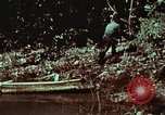 Image of survival techniques Philippines, 1968, second 59 stock footage video 65675072402