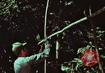 Image of survival techniques Philippines, 1968, second 8 stock footage video 65675072403