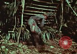 Image of survival techniques Philippines, 1968, second 26 stock footage video 65675072403