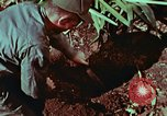 Image of survival techniques Philippines, 1968, second 44 stock footage video 65675072403
