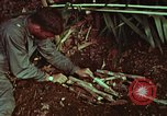 Image of survival techniques Philippines, 1968, second 49 stock footage video 65675072403