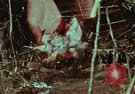 Image of survival techniques Philippines, 1968, second 1 stock footage video 65675072404