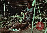 Image of survival techniques Philippines, 1968, second 12 stock footage video 65675072404