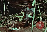 Image of survival techniques Philippines, 1968, second 13 stock footage video 65675072404