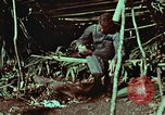 Image of survival techniques Philippines, 1968, second 15 stock footage video 65675072404