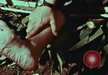 Image of survival techniques Philippines, 1968, second 22 stock footage video 65675072404