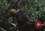Image of survival techniques Philippines, 1968, second 31 stock footage video 65675072406