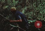 Image of survival techniques Philippines, 1968, second 32 stock footage video 65675072406