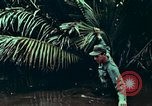 Image of survival techniques Philippines, 1968, second 35 stock footage video 65675072406