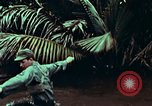 Image of survival techniques Philippines, 1968, second 40 stock footage video 65675072406