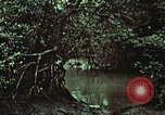 Image of survival techniques Philippines, 1968, second 54 stock footage video 65675072406