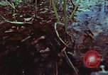 Image of survival techniques Philippines, 1968, second 60 stock footage video 65675072406