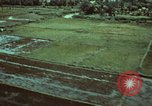 Image of survival techniques Philippines, 1968, second 6 stock footage video 65675072407