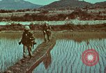 Image of survival techniques Philippines, 1968, second 17 stock footage video 65675072407