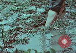 Image of survival techniques Philippines, 1968, second 34 stock footage video 65675072407