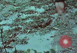 Image of survival techniques Philippines, 1968, second 35 stock footage video 65675072407
