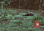 Image of survival techniques Philippines, 1968, second 40 stock footage video 65675072407