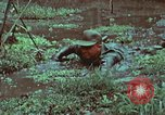 Image of survival techniques Philippines, 1968, second 53 stock footage video 65675072407