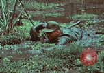 Image of survival techniques Philippines, 1968, second 57 stock footage video 65675072407