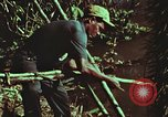 Image of survival techniques Philippines, 1968, second 55 stock footage video 65675072408