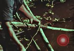 Image of survival techniques Philippines, 1968, second 58 stock footage video 65675072408