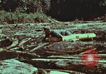 Image of survival techniques Philippines, 1968, second 61 stock footage video 65675072409