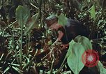 Image of evacuation techniques Philippines, 1968, second 31 stock footage video 65675072411