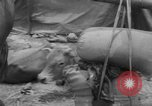 Image of refugees evacuated Vietnam, 1967, second 38 stock footage video 65675072479