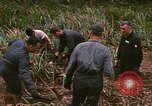 Image of recovery of LB-7 aircraft debris Bluefields Nicaragua, 1969, second 17 stock footage video 65675072642
