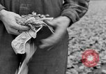 Image of cannery labors strike Racine Wisconsin USA, 1938, second 17 stock footage video 65675072649