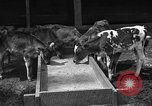 Image of cattle ranch United States USA, 1922, second 12 stock footage video 65675072781