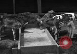 Image of cattle ranch United States USA, 1922, second 13 stock footage video 65675072781